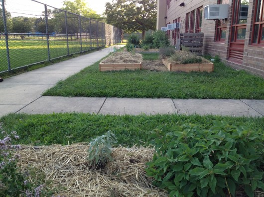 READY FOR SCHOOL: Fresh timbers and fresh straw mulch prepped the JW edible gardens for the school year.