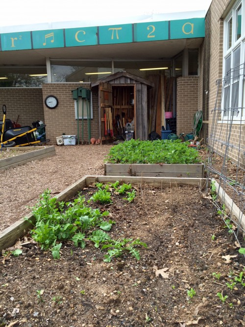 Garden beds are already  home to arugula, strawberries and lettuce.