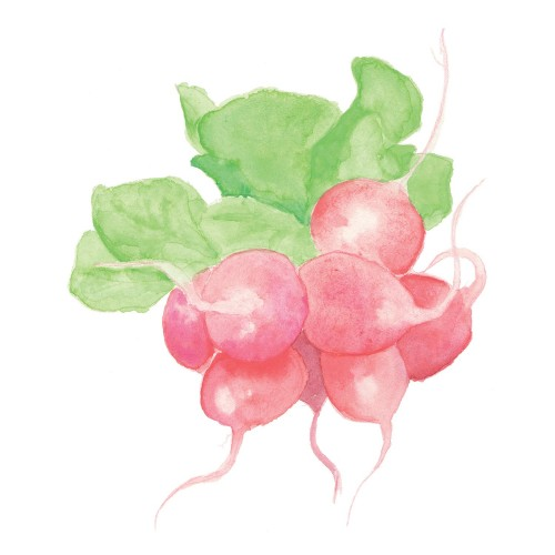 Radishes detail of custom wallpaper for the Princeton School Gardens Cooperative, by Jess Atkins.