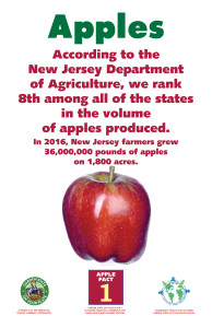 Apples_Facts_Signs