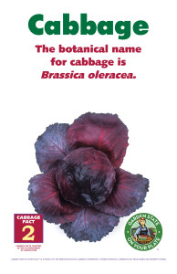 Cabbage_Facts_Signs2