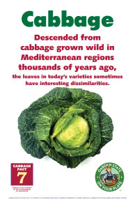 Cabbage_Facts_Signs7