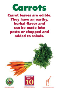 Carrot_Facts_Signs10