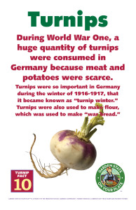 Turnip_Facts_Signs10