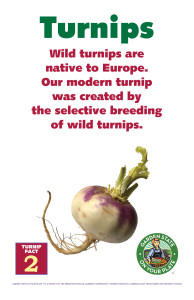 Turnip_Facts_Signs2