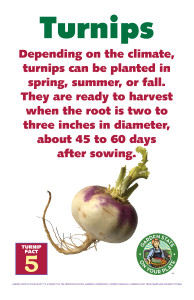 Turnip_Facts_Signs5
