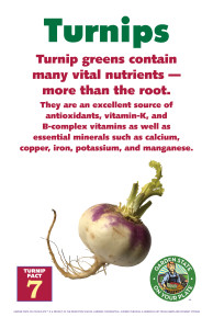 Turnip_Facts_Signs7