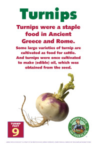 Turnip_Facts_Signs9